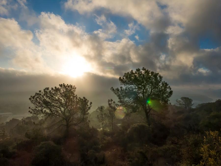 Morning sun, the jewel in a Torrey pines tiara