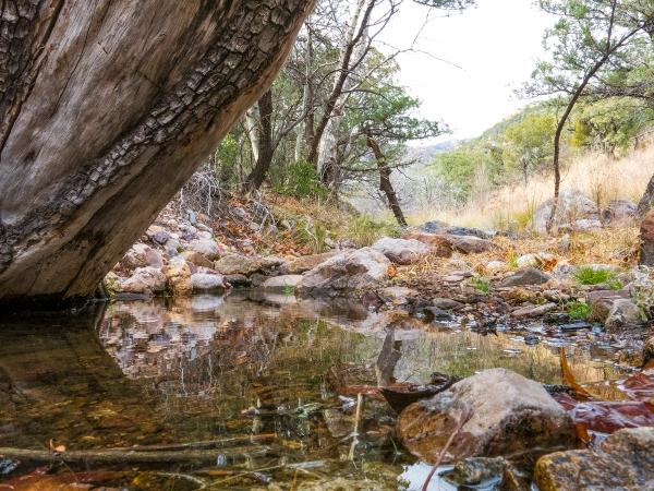 Bear Spring in the Santa Rita mountains