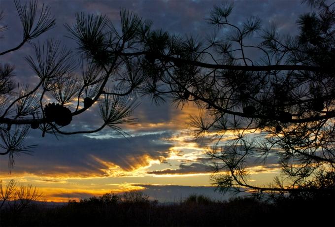 Sunrise through Torreys