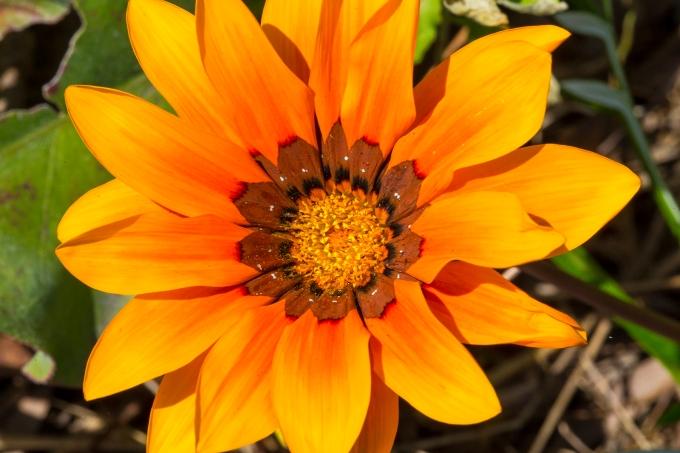 Bold pollinator