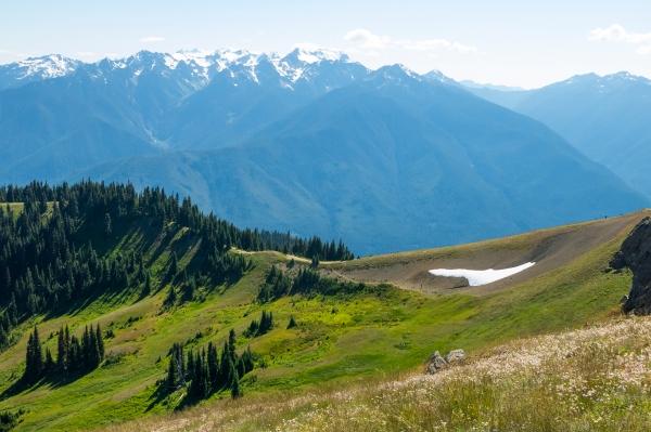 Hurricane Ridge trail, and Mt. Olympus