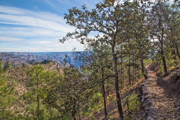 The Tarahumara trail beneath our feet