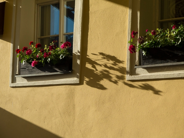 Flower boxes and light