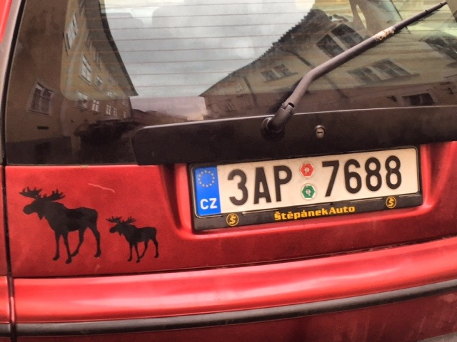A successful Prague moose sighting