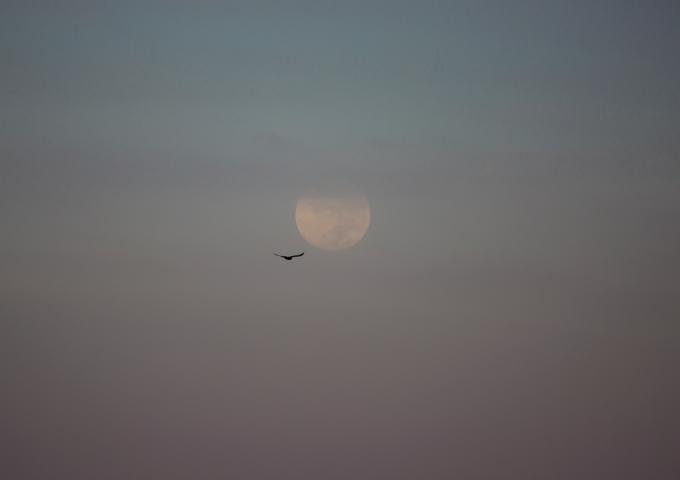 Serendipitous moon bird