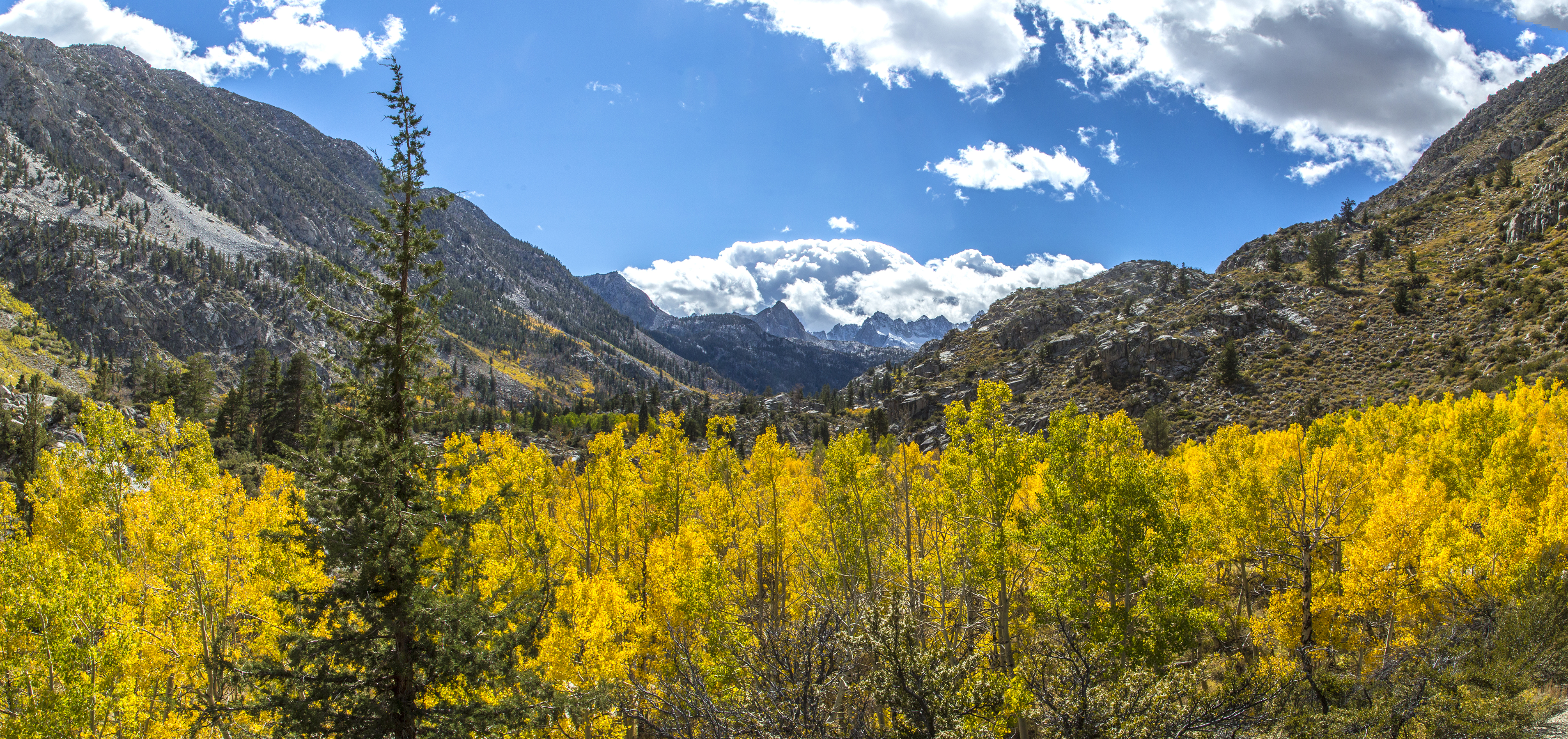 Golden aspens and clouds