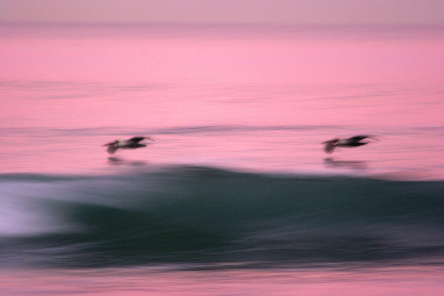 Dawn Patrol Pelicans