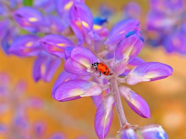 Julian Ladybug card