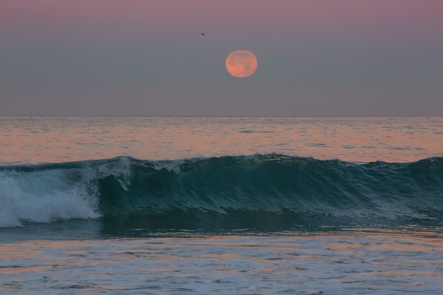 Moonset with wave and bird