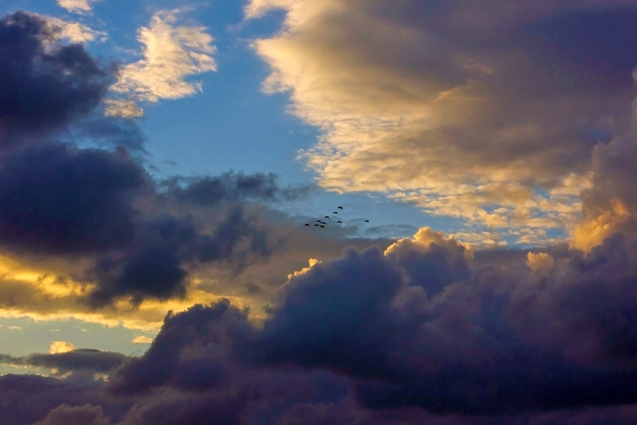 Pelicans in a cloudy sunset
