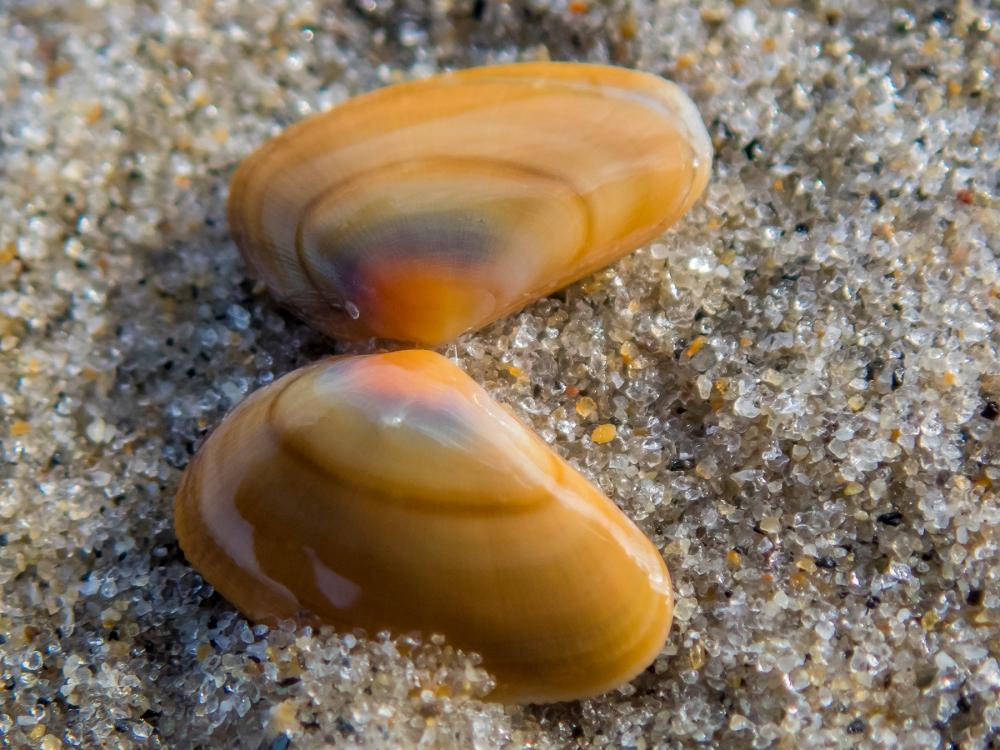 Seashell and sand
